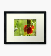 Mexican Hat with Florets Framed Print