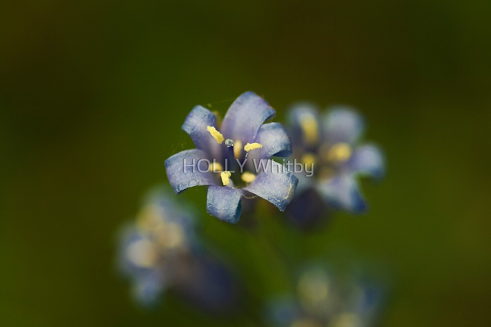 Blue Bell (Hyacinthoides non-scripta) by Elaine123