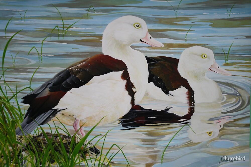 Billabong Buddies by Lyrebird