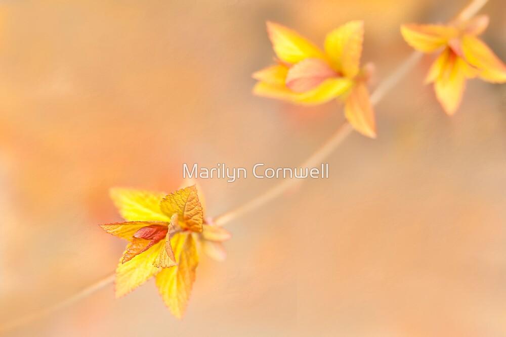 Spring Beginings by Marilyn Cornwell