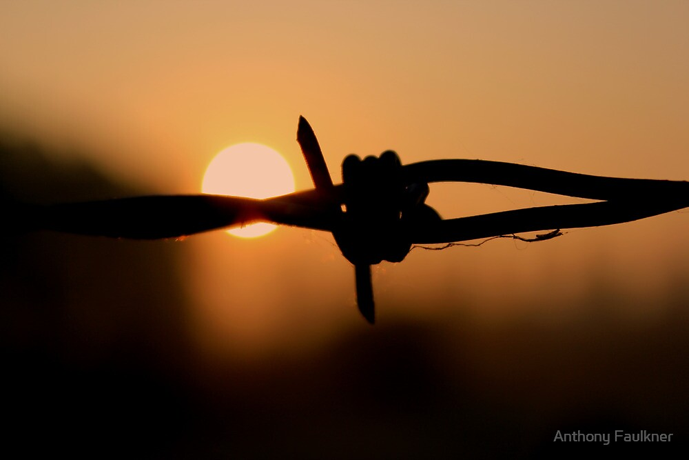 Barbed wire - Sunrise by Anthony Faulkner