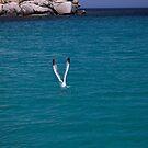 Seagull's dance by Alessandra Antonini