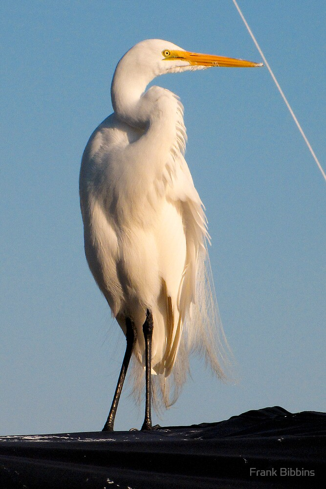 Great Egret and Line... by Frank Bibbins