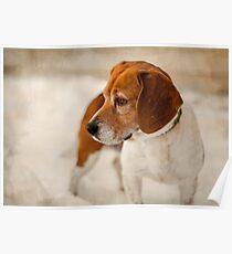 Textured Beagle Portrait Poster
