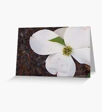 One Dogwood Blossom Greeting Card
