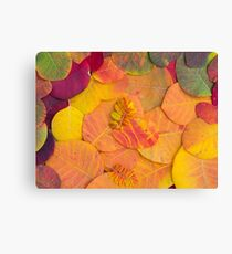 Colorful bright autumn leaves background Canvas Print