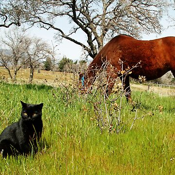 Mustang and Friend by Shutterbug-csg