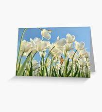 Insect world Greeting Card
