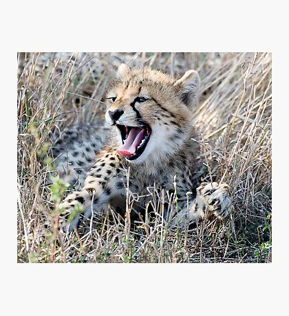 Yawn ! Photographic Print