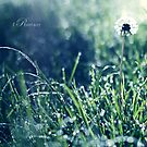 Dandelion by fRantasy