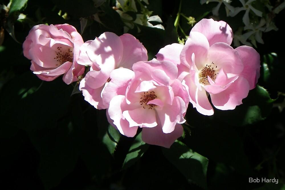 Row of Roses by Bob Hardy
