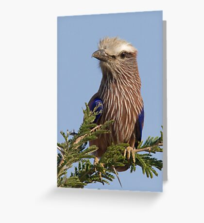 Purple Roller Greeting Card
