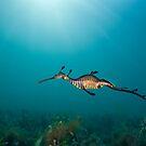 Weedy Seadragon by MattTworkowski