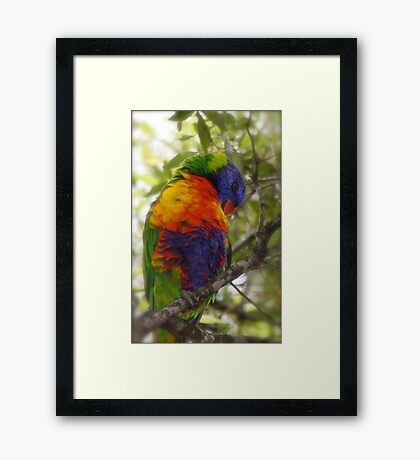 Quite shy really Framed Print