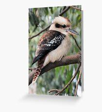 Kookaburra Sitting in a Tree Greeting Card