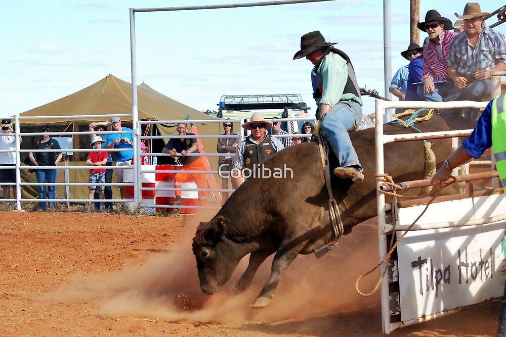 Ride Em Cowboy by Coolibah