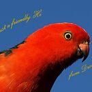 Male King Parrot - Drouin, Australia by Bev Pascoe