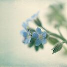Forget-me-not by Caterpillar