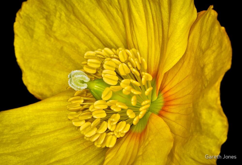Flower 15 by Gareth Jones