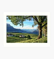 Italian Vineyards Art Print