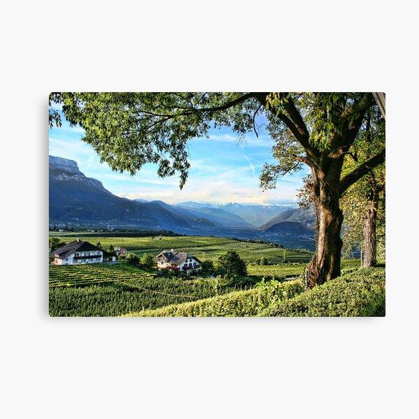 Italian Vineyards Canvas Print