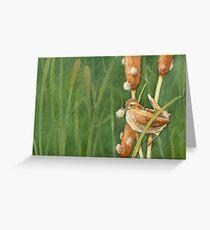 Marsh Wren Greeting Card