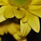 Petal Beauty by HeavenOnEarth