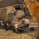 Fox Kitt's  by John  Sperry