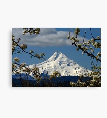 Blossoms On The Hood Canvas Print