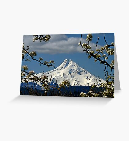 Blossoms On The Hood Greeting Card
