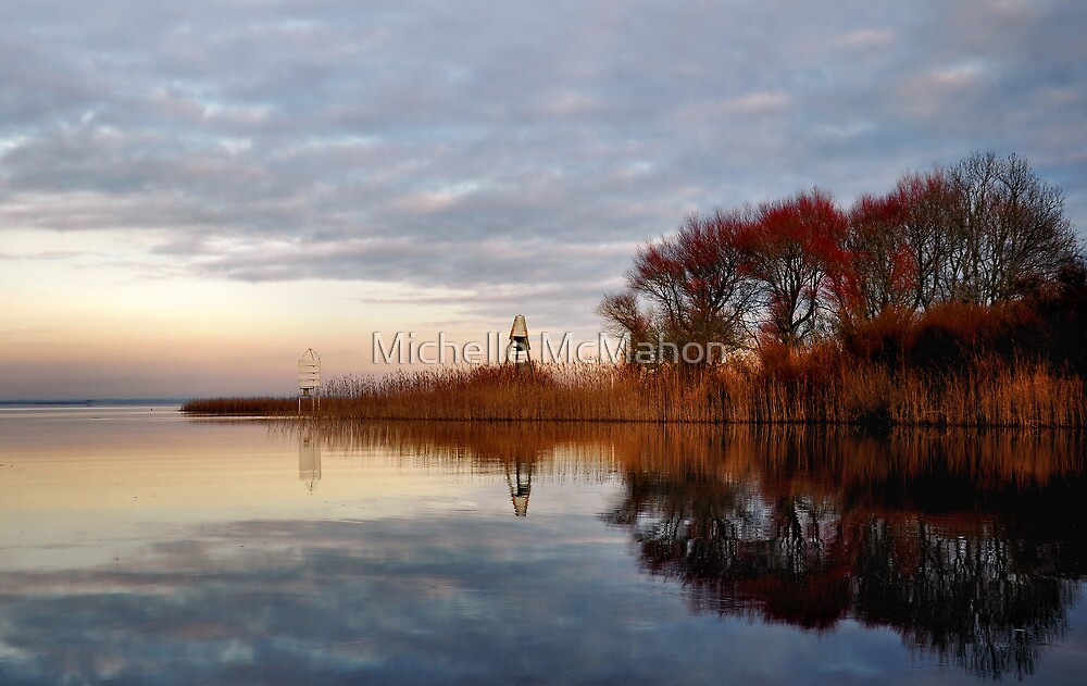 golden reeds.. by Michelle McMahon