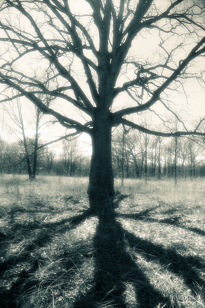 In the shadow on an old one by MLabuda