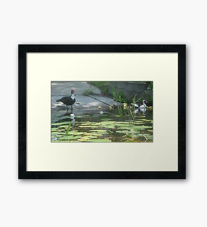NOONTIME SWIM Framed Print