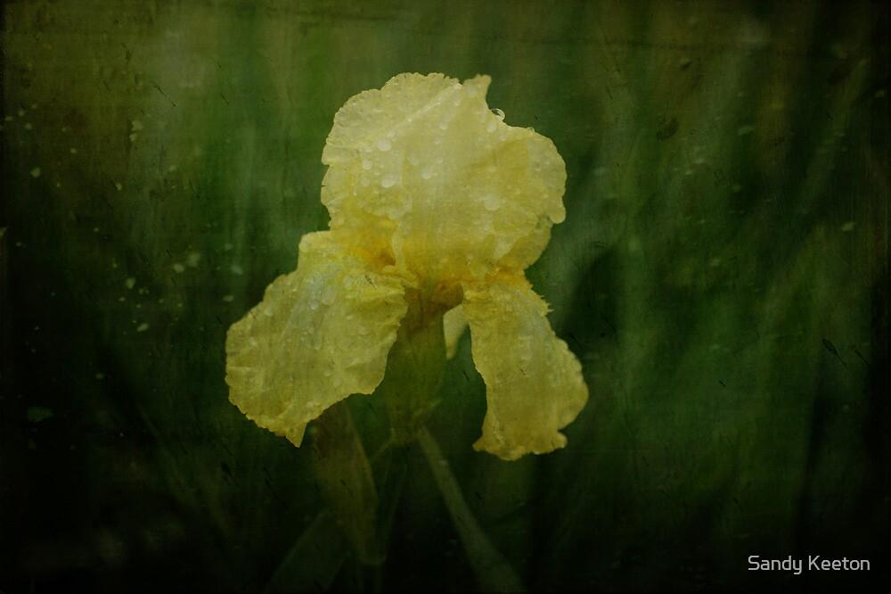 Iris in the Rain by Sandy Keeton