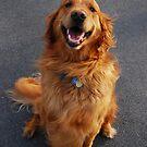That Golden Smile by jodi payne