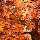 Yackandandah Autumn Series ~ Isaac Izaac's Red Oak by Jane Keats