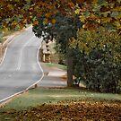 Yackandandah Autumn Series ~ Stone Bridge Maple by Jane Keats