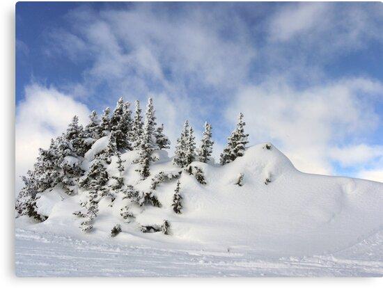 Snowy Trees by Ryan Davison Crisp