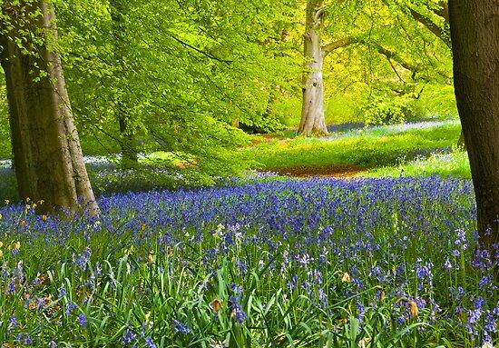 Spring in the Woods by Trevor Kersley