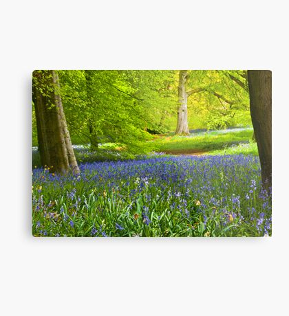 Spring in the Woods Metal Print
