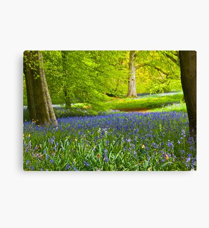 Spring in the Woods Canvas Print