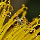Pollination 22 by Gareth Jones