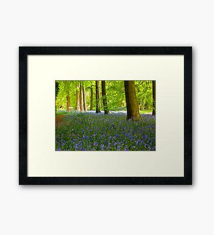 Woodland Scene - Thorpe Perrow. Framed Print