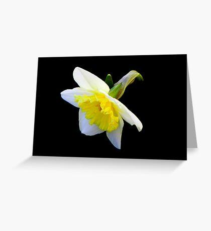 Spring has sprung!!! © Greeting Card