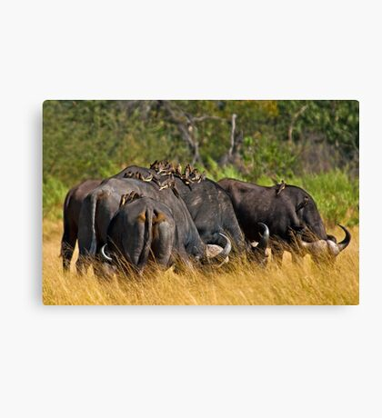 Oxpeckers' gathering Canvas Print
