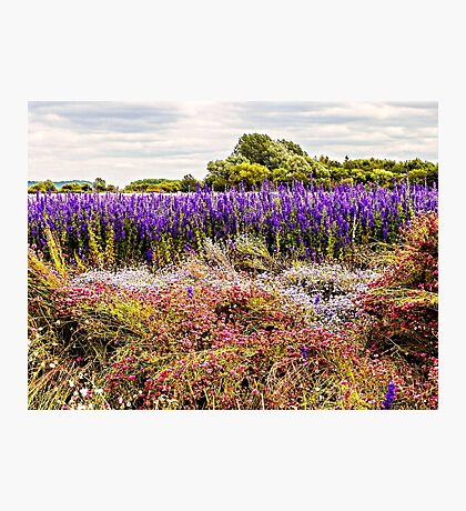 Nature's Canvas Photographic Print