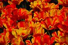 A Splash of Orange by John Schneider