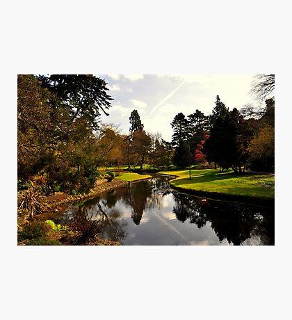 Botanical Garden. Photographic Print