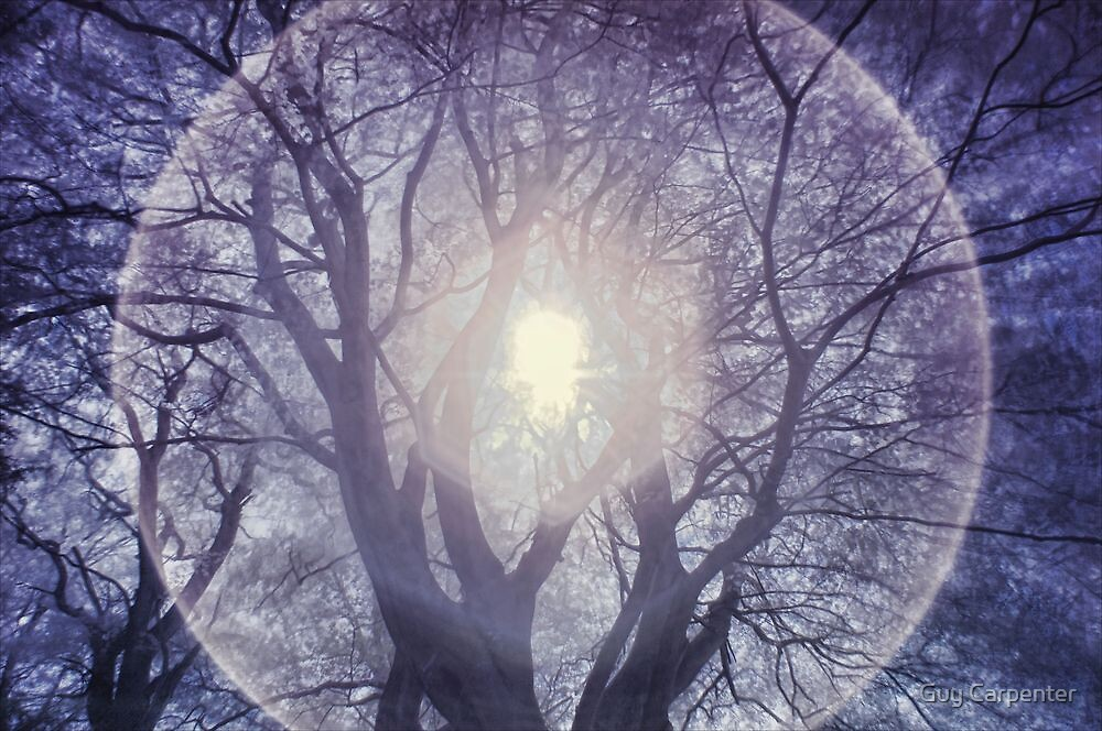 Tree with Halo by Guy Carpenter