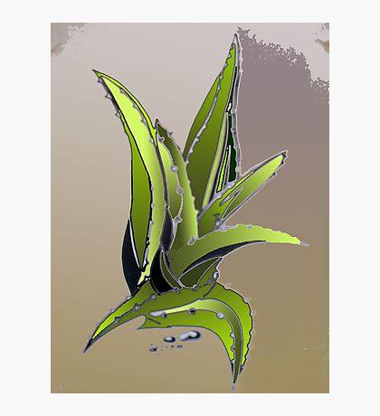 just cactus Photographic Print